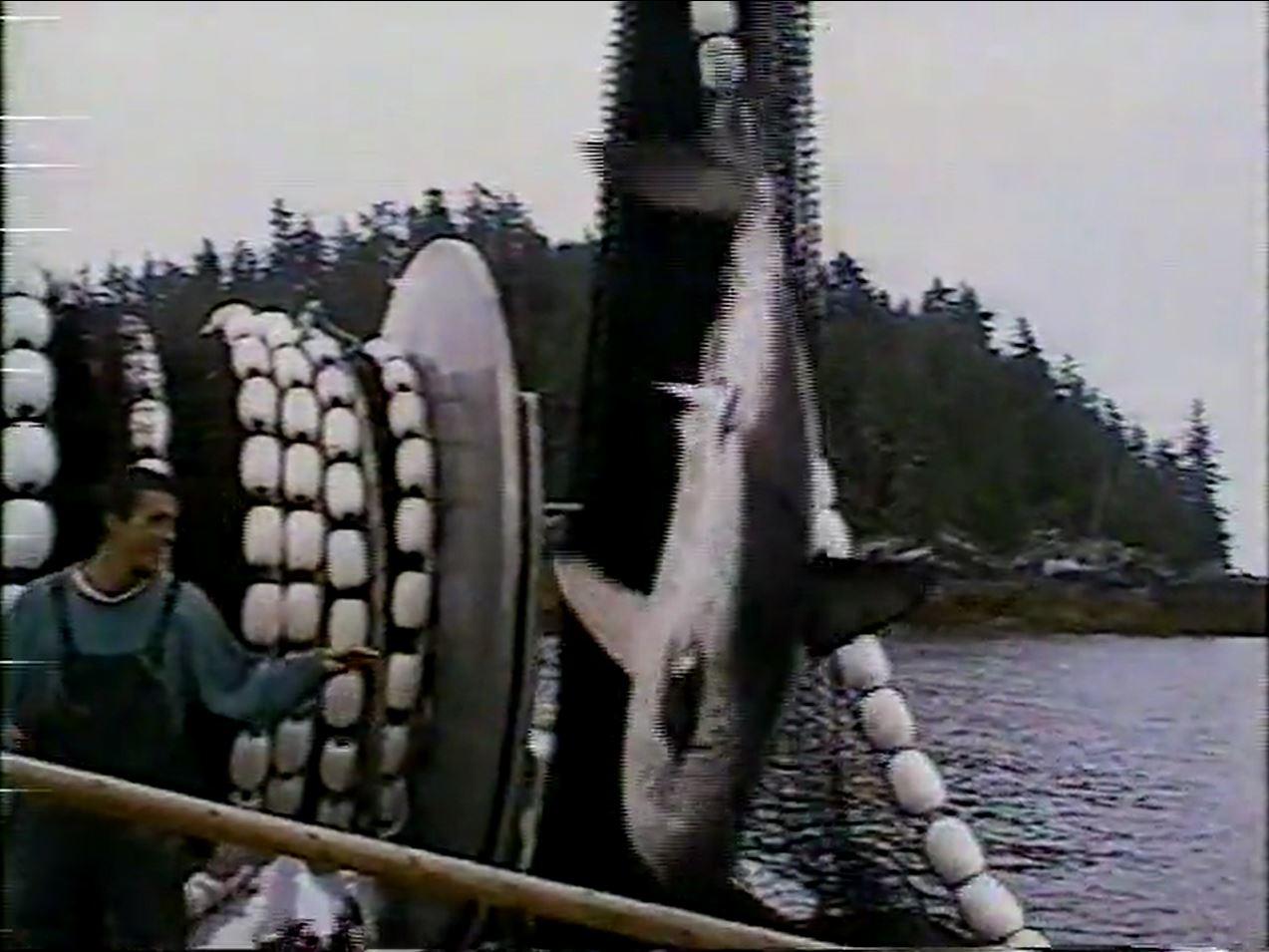 Fishing Clips